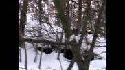 Лов на Дива Свиня Сърбия