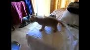 Гладен И Нахален - Смешно Коте
