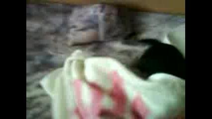 Кучето Ми След Къпане
