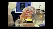 2/ Истината за Кристалните черепи