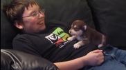 Малко кученце имитира