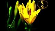 Шепотът На Цветята - Инструментал