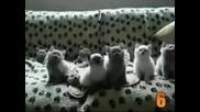 Top 10 Cute Cat Videos