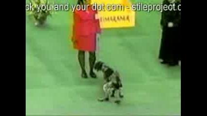Куче Се Излага На Изложба