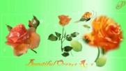 Прекрасни оранжеви рози! ... ...