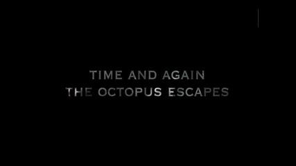 Морски Лъв Атакува Октопод В Епична Битка