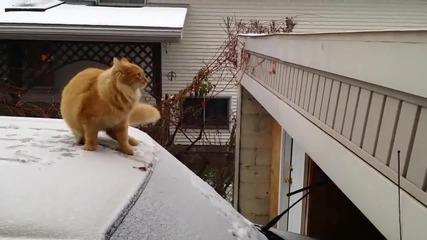 Смях ... Котка се проваля скачайки от заснежен таван на автомобил !!!