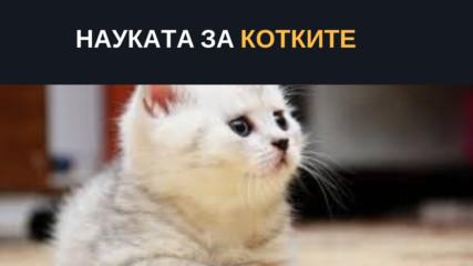 Науката за котките