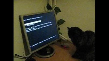 Котка компютърен фен