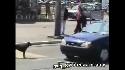 dogs vs car