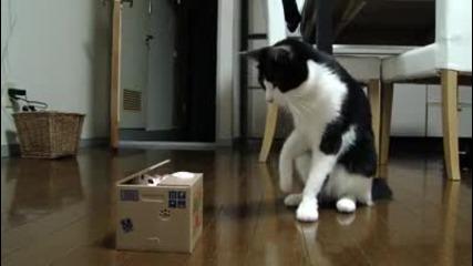 Котенца си играят с кашон
