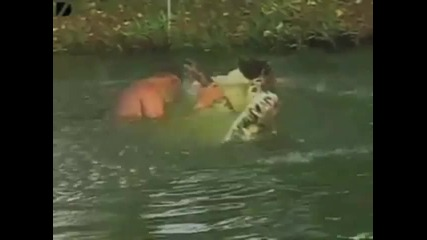 Жестоки и забавни кадри: хора vs. животни 1 част