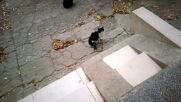 Гладни котаци в очакване на храна