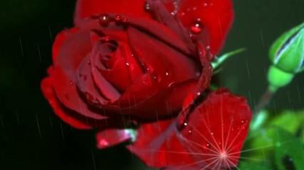 Рози в дъжда ... ... (music Giovanni Marradi)