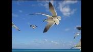 Стефан Воронов - Бели чайки над Мичурин ( Авторски )