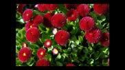 Vivaldi La primavera