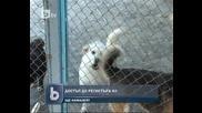 Ветеринарите с достъп до националната база данни за животните в страната