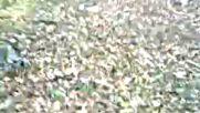 Ormanda Hirsizlik Yapiyorlar Bende Yakaladim Gibi Atiyorum Zindana Ele Verdi Ali Sopar Kendisi Mamiz
