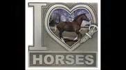 Horses - My Life