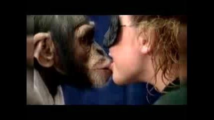 Скрита Камера - Целувки С Маймуни