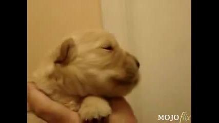 Куче се опитва да свири