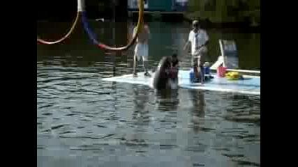 делфин Със Странно Поведение