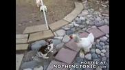 Кокоши ухрана !!!