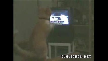 Тази котка се боксира - Смях
