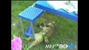Компилация смешни котета