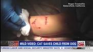 Вижете как домашна котка спаси дете за да не бъде изядено от куче