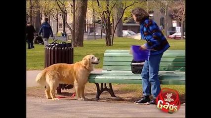 Страхотна шега с куче