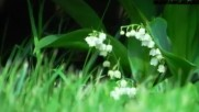 Bijelo Dugme - Djurdjevdan