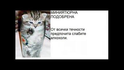 cat Kotki :]