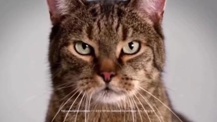 Най-популярните реклами с котки и кучета