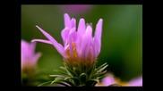 Цветя в растеж (от последователни кадри) *hq*