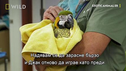 Папагалът Джак | Болницата за екзотични животни на д-р Кей | NG Wild Bulgaria