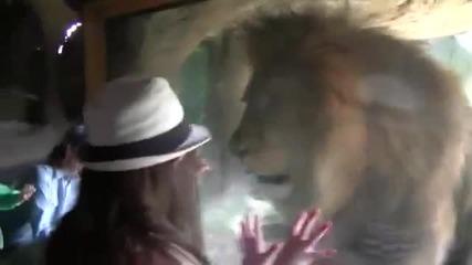 Малко момиче срещу лъв