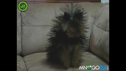 Бухнало куче