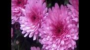 Група Атлас Есенни цветя