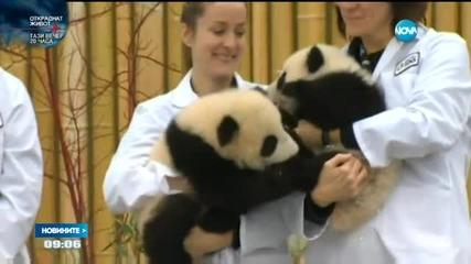 Канадският премиер даде имената на две гигантски панди