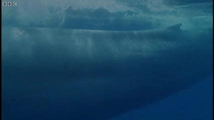 Синия Кит - Поглед Отвътре