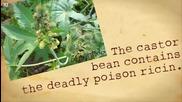 10-те силно смъртоносни растения
