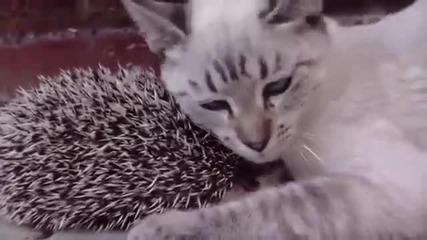 Хармонично приятелство между Таралежче и Коте