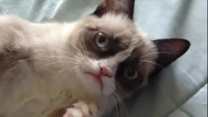 """""""сърдита"""" котка се усмихва """"grumpy cat"""""""