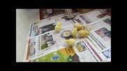 Kirmizi Kulakli Kaplumbaga Yavrusu Ve Civcivlerin Dostlugu Belgesel 2015 Hd