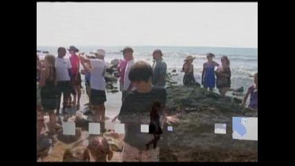 Морето изхвърли труп на голяма бяла акула край бреговете на Роуд Айлънд