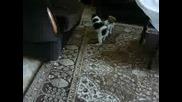 Кученца