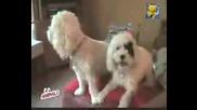 Куче - Пълен непукис
