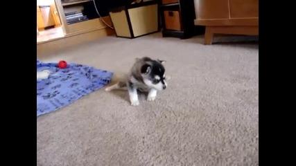 Малко сладко кученце, което се простира