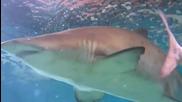 David Bisbal Buceando con tiburones toro en el acuario de Roquetas de mar